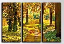 Cuadro fotografico base madera, 87 x 62 cm, Bosque Otoño Atardecer Sol