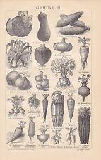 Gemüse Zwiebeln Karotte Melone Sellerie Kürbis HOLZSTICH von 1884 Gemüsearten