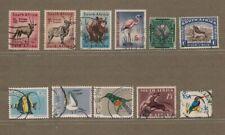 A56 SUD AFRICA: ANIMALI SELVATICI PESCI UCCELLI