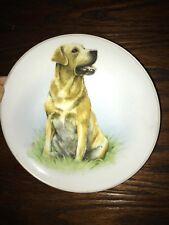 Ceramic White Lab Decorative Plate