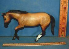 Peter Stone Dapple Buckskin Performance Quarter Horse exclt