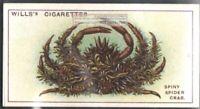 Spiny Spider Crab c90 Y/O Trade Ad Card