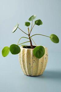 NEW ANTHROPOLOGIE Yellow Glaze Crackled TerraCotta Sonny Pot Sunny Small Planter