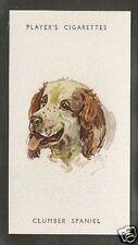 1940 Peter Biegel Dog Art Head Study Player's Cigarette Card Clumber Spaniel