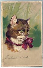 Cute Sweet CAT with Big Lace 1906 EMBOSSED Postcard