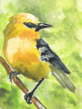 Aceo Blue tailed warbler yellow bird reproduction print of original painting