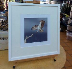 Christmas art gift Wildlife 'Osprey' Signed Print 280mm x 280mm