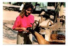 English Fallow Deer Postcard Catskill Game Farm New York Feeding in Lower Ground