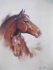 Ruane Manning horse colt 1 print
