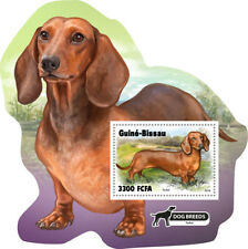 Guinea Bissau 2018 dogs  fauna S201811