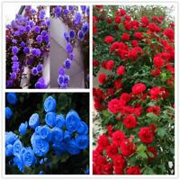 100 Pcs Climbing Roses Seeds Climbing Plants Chinese Flower Seed 24 Species Vari
