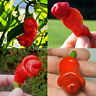 Organic Peter Pepper Red Hot Pepper Chilli Willy Seeds - Exotic - RARE New US