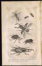 Earwig, Glow Worm, Stag, Diamond, Rhinoceros, Hercules Beetles - 1830 Goldsmith
