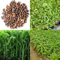 400Pcs/Bag Vegetable Garden Seeds Water Kang Plant Leaf Green Spinach Seeds Good