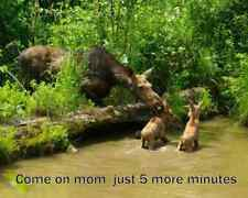 "Funny moose refrigerator magnet 2 1/2x 3 1/2"""