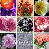 Carnation Bonsai Potted Plants Dianthus Caryophyllus Flowers 200 PCS Seeds Rare