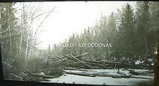PHOTO 1890 lumber log logging lumberjack CANADA timber NASHWAAK RIVER STRADDLING