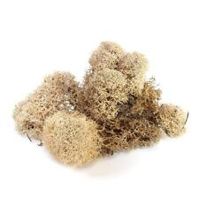 PRESERVED REINDEER MOSS - OFF WHITE - 75G