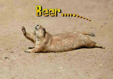 Magnet Animals Funny Prairie Dog Thirst Thirsty Crawl Beer Drink
