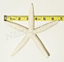 "White Finger Starfish Sea Shell Bleached Finger 6"" - 7"" ( 1 pc )"