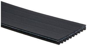 Serpentine Belt-Standard ACDelco Pro 10K840 fits 07-12 Ford Mustang 5.4L-V8