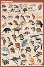 Marsupials - Educational Science Chart Poster 24x36 Free Shipping