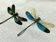 2 dragon flies full data species 2 3/4 inches A 1 ready to mount