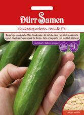 Dürr Snackgurken Iznik F1  rein weiblich blühend Gurke Salat Gurken Samen 1115
