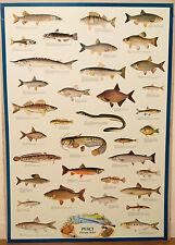(PRL) 1981 PESCI ACQUA DOLCE FISHES FISH POISSON VINTAGE PRINT AFFICHE POSTER