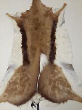 Springbok Skin XL A-grade Best quality hides / skins in Africa