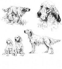 English Setter - 1963 Vintage Dog Print - Matted *