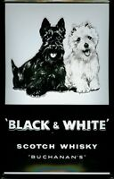 Black & White Scotch Whisky Motif 2 Blechschild Schild Blech Tin Sign 20 x 30 cm