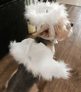 Dog Cat Angel Halo and Wings Pet Costume Accessory Set Halloween Christmas Xmas