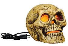 Скелеты и черепа