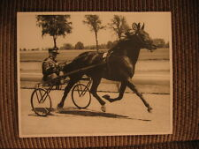 "World Record Standardbred Race Horse ""Emily's Pride"" & Flick Nipe Vintage Photo"