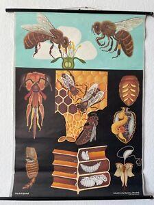 Original Vintage Honey Bee School Chart - Jung Koch Quentell Educational Poster
