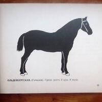 1900 Альбом Русских, Иностранных Пород Лошадей RUSSIAN World Horse Breeds HORSES
