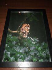 A3 Framed Owl Photo