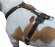 "Real Leather Dog Harness 37""-45"" chest size Mastiff Great Dane Saint Bernard"