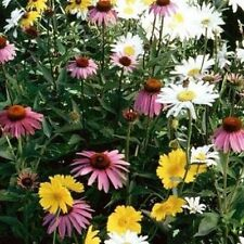 Partial Shade Flower Seed Mix - Bulk - Garden Seeds