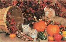 Postcard Kittens North Shore Animal League Port Washington New York