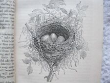 Bird Architecture  (nests etc. ) by James Rennie 1844 Published Charles Knight