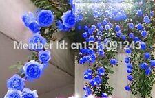 Promo !! rare blue climbing roses seed bag 200PC, beautiful climbing plants