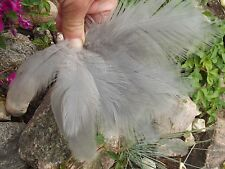 REAL grey HERON FEATHERS fishing fly tying taxidermy 20 pcs