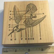 Bird Diagram Ornithology by Paula's Kit Club Htf Rubber Stamp
