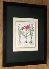 Botanical framed wall art - 12''x16'',  Besler print, Tulip print