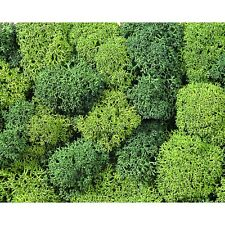 NOCH multi-scale ~ 'LICHEN MOSS' ~ model train scenery #8610