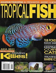Tropical Fish Magazine Killfish Cory Catfish Tub Ponds Treat Marine Ich Rams