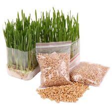 400PCS Seeds Grass Cat Wheat Catnip Garden Plant Catgrass 100% Organic Pets