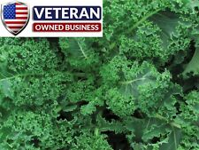 Kale seeds Blue Curled Scotch 500+ non gmo and heirloom seeds free shipping